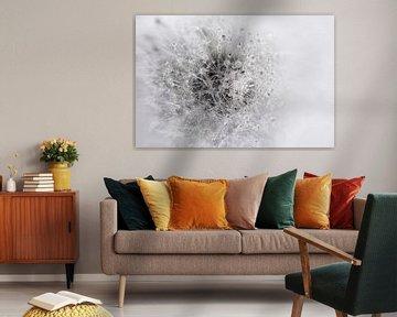 Flauschige Kugel schwarz-weiß von Anouschka Hendriks
