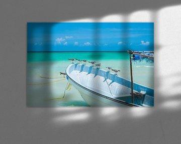 Meeuwen zittend op een witte boot met een blauwe lucht in Isla Holbox, Mexico