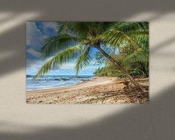 Strand in Corcovado NP in Costa Rica van Corno van den Berg