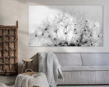 Paardenbloempluis met waterdruppels van Anouschka Hendriks