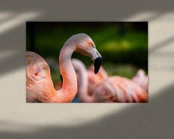 Flamingo van Randy Riepe