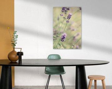 Lavendel von LHJB Photography