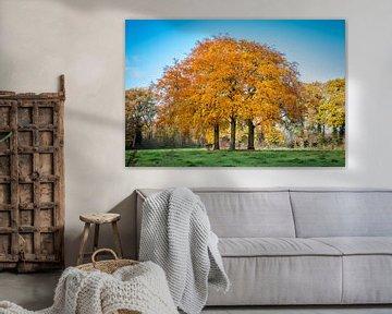 drie beukenbomen in prachtige herfstkleuren van Marcel Bakker