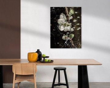 Im Wasserglas - Quittenblüte von Christine Nöhmeier