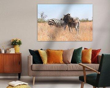 Zebras im Krüger-Nationalpark, Südafrika