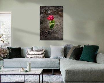 Spezielle Tulpe mit Kontrast von Martine Moens