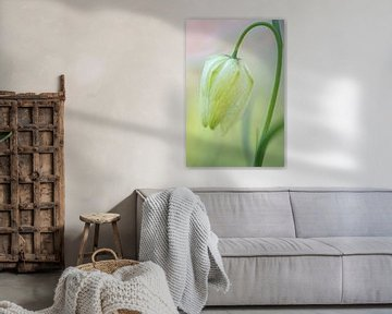 Witte kievitsbloem met achtergrond in pastelkleuren van Angelique Koops