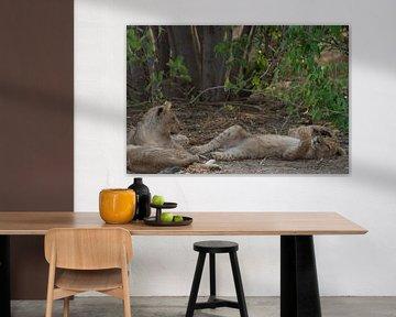 leeuwen welpjes van Ed Dorrestein