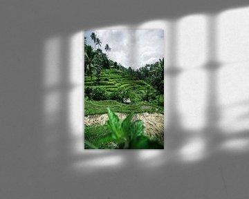 Grüne Reisfelder Bali von road to aloha