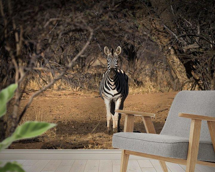 Sfeerimpressie behang: zebra van Ed Dorrestein