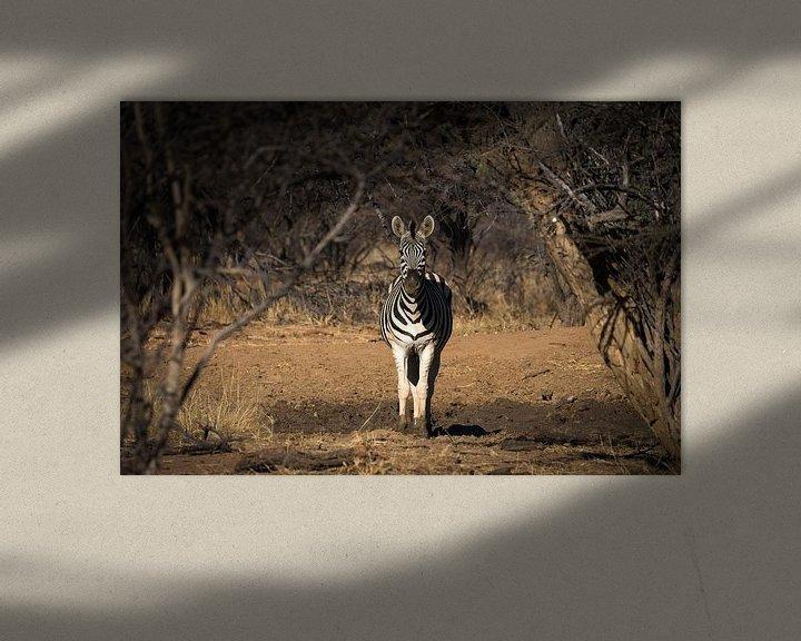 Sfeerimpressie: zebra van Ed Dorrestein