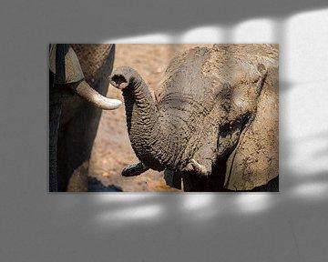 olifant zoekt verbinding van Ed Dorrestein