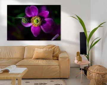 bloem van Marcel Jansen
