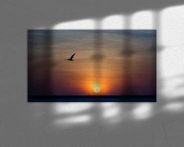 Sonnenuntergang in Darwin von Pieter van der Zweep