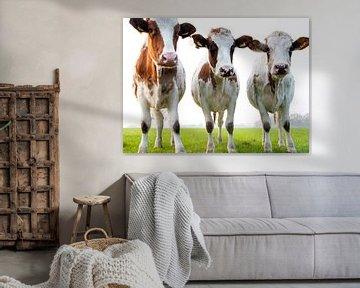 3 prachtige koeien in de wei van Bianca ter Riet