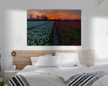Red-White van peterheinspictures
