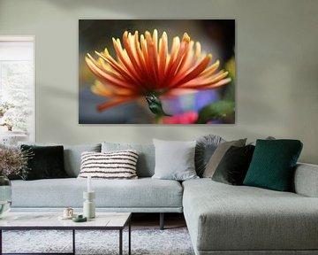 Chrysantheme von Ingrid van Heeswijk