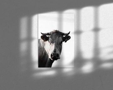 Kuh im Verstand von Sabine Timman