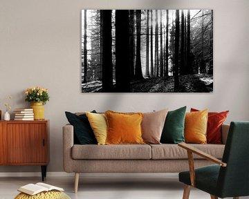 Lichtdurchfluteter Wald von Thomas Jäger