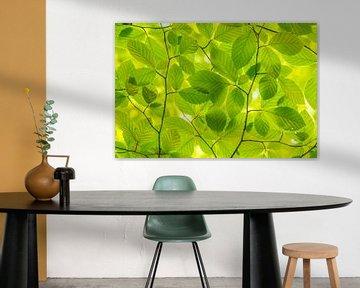 Mint groene Lente bladeren