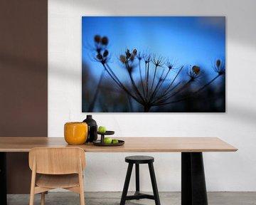 Froschblume von Bartholda Lucas