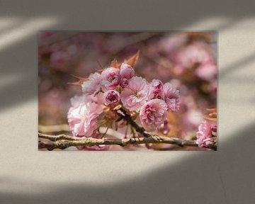 fleurs de couleur rose clair sur une branche d'un arbre à fleurs sur Margriet Hulsker