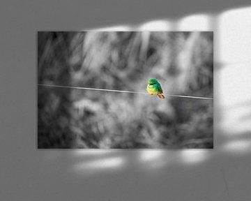 Kleine groene vogel van Jeroen de Weerd