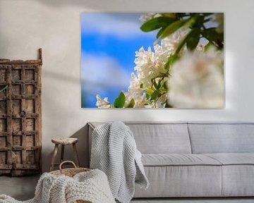 Rhododendron von Anette Jäger