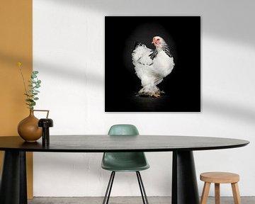 Witte kip foto op zwarte achtergrond van Florence Schmit