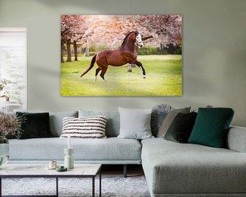 Galoppierendes Pferd unter den Blütenbäumen von Vera Sijpkes