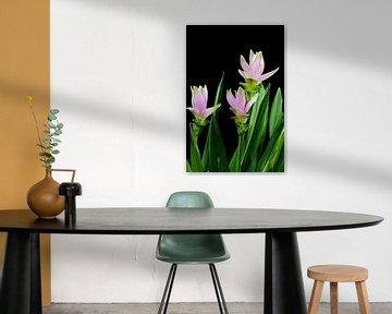 curcuma bloemen von 7Horses Photography