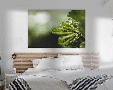regendruppel op plant van Yara Verstappen