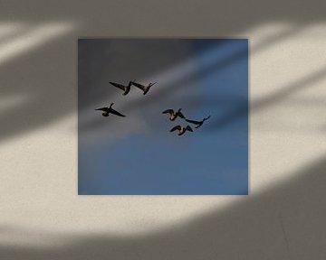 Vliegende en kwekkende eenden van Naomi Visser