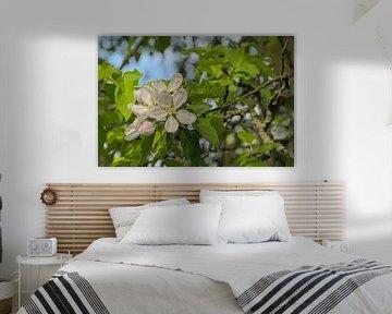 Große weiße Apfelblüten von Kristof Lauwers