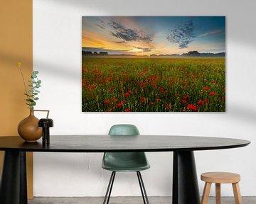 Mohnblumenmeer von Andrew George