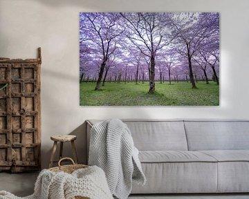 een park vol bloesembomen van Dennis Bresser