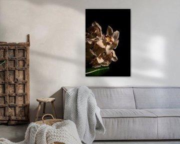 Florale Porträt-Atmosphäre