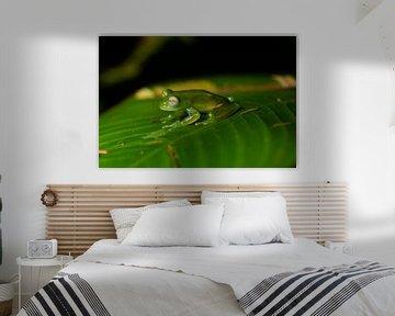 Glasfrosch von Merijn Loch