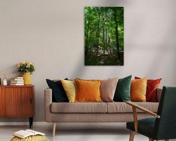 La lumière du soleil tombe doucement entre les arbres. sur Jurjen Jan Snikkenburg