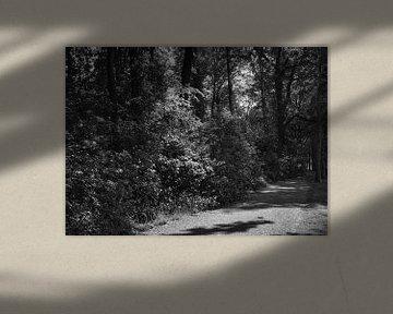 Der Weerter-Park schwarz-weiß von J..M de Jong-Jansen