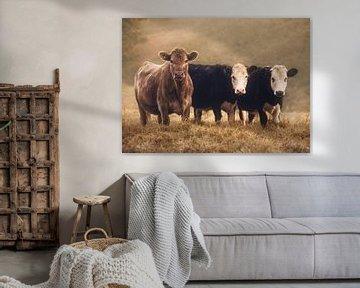 Neugierige Kühe von Marina de Wit