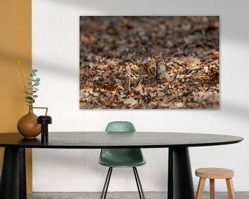 Siberische grondeekhoorn zegt kiekeboe! van Paul Weekers Fotografie