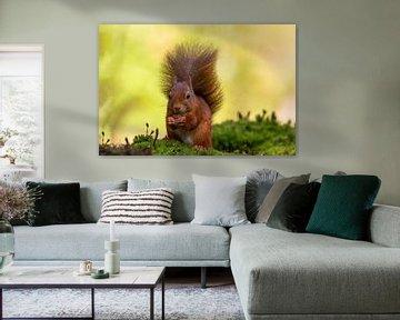 Eekhoorn met mooie pluimstaart van Paul Weekers Fotografie