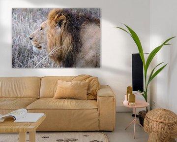 Mannelijk leeuwenportret van pixxelmixx