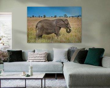 Reuzenafrikaanse olifant in de savanne van pixxelmixx