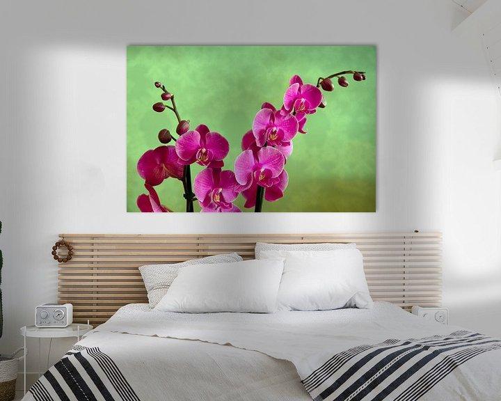 Sfeerimpressie: Orchidee van Jaap Mulder