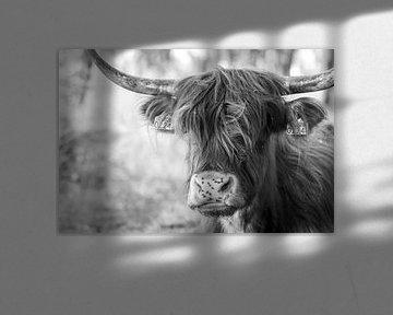 Porträt Schottischer Hochländer schwarz-weiß von Charlene van Koesveld