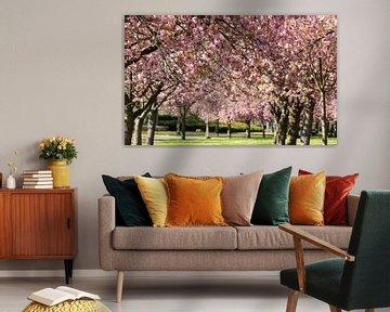 Kirschblüte im Park von Sittard von Ann Barrois