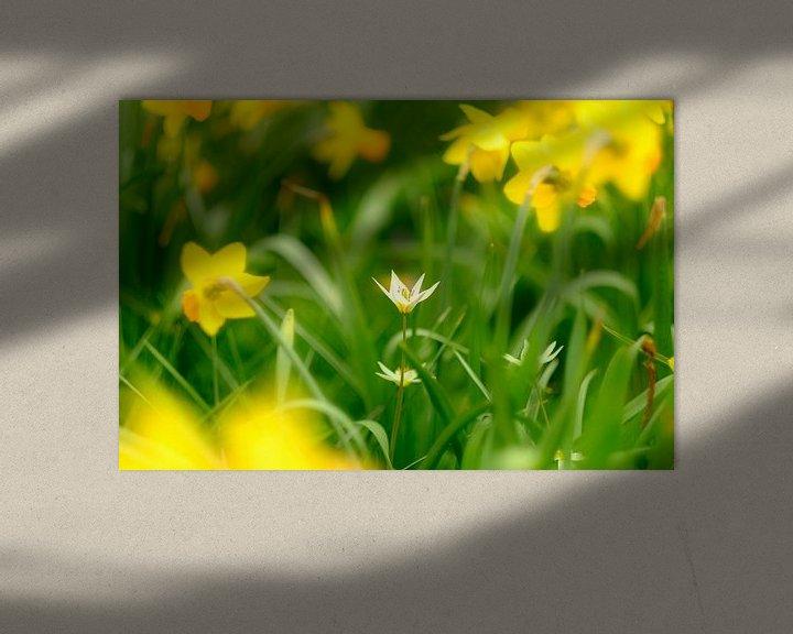 Sfeerimpressie: Lente in bloei van Arjen Roos