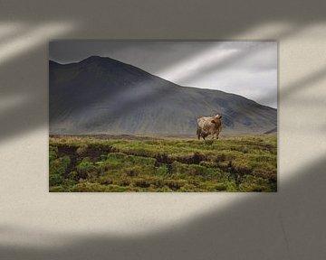 Une vache dans une Islande montagneuse sur Stefan Shop